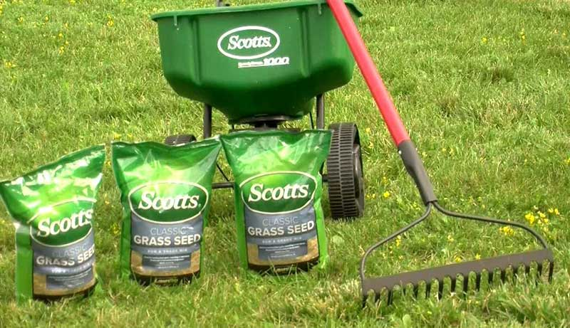 Best Starter Fertilizer for Overseeding